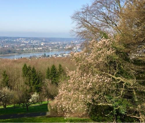 Blick von der Hirschburg zum Rheintal. Es wird Frühling.