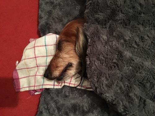 hund epileptischer anfall