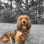 Epilepsie bei meinem alten Hund